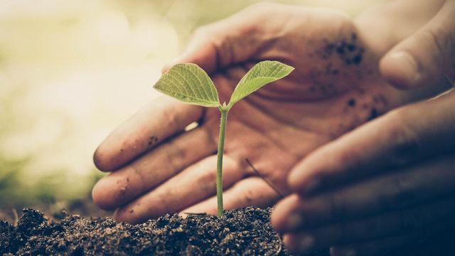 L'attribut alt de cette image est vide, son nom de fichier est plante-qui-pousse-au-jardin.jpeg.
